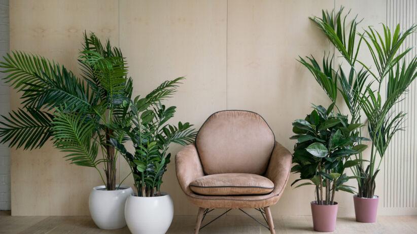 Modne Rosliny Doniczkowe 7 Kwiatow Doniczkowych Do Nowoczesnego Wnetrza Trees To Plant Plants Planters