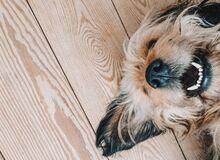 Jaka rasa psa do ciebie pasuje