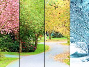 Na zdjęciu został przedstawione drzewo w czterech sceneriach: zimowej, wiosennej, jesiennej, letniej.