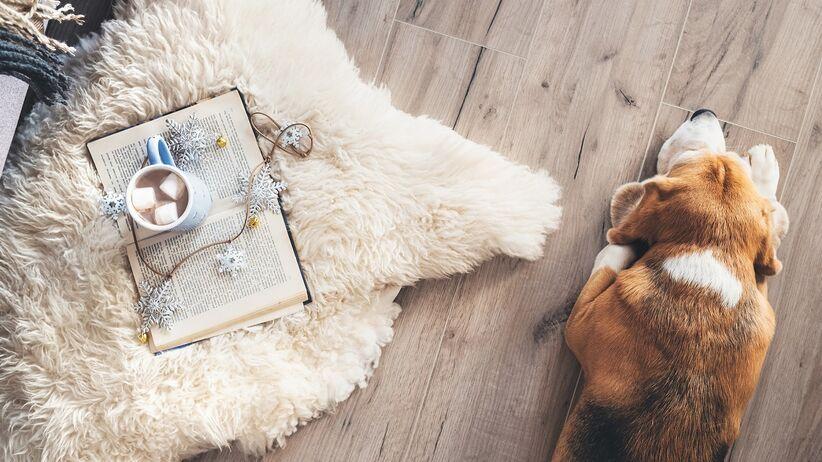 Pies leży przy dywanie ze skóry owczej.