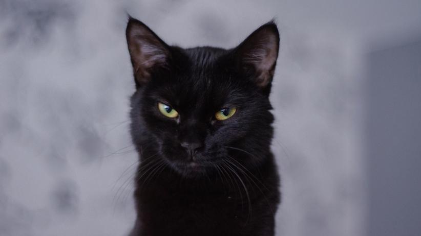 Czarny kot z zielonymi oczami