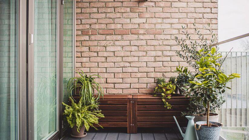 Jakie drzewko na balkon wybrać?