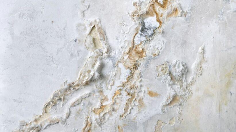 Jak poradzić sobie z grzybem na ścianie?