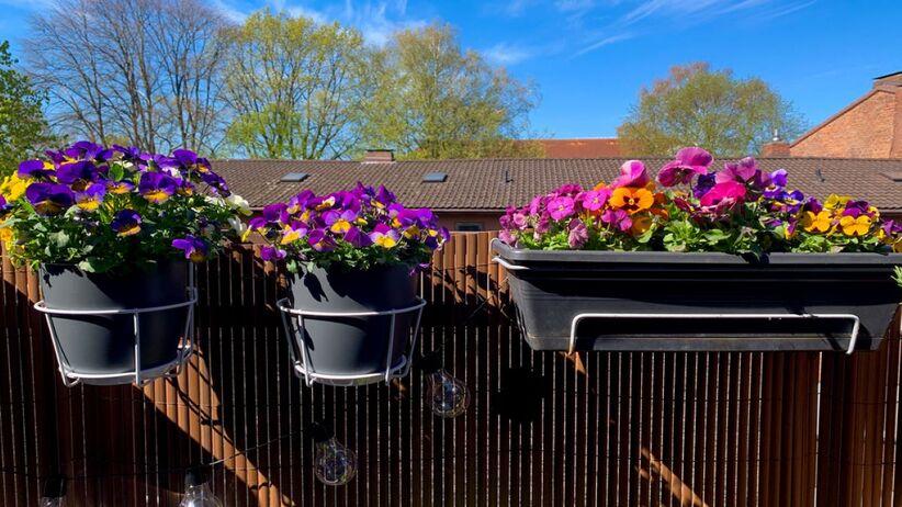 Jakie kwiaty na słoneczny balkon wybrać?