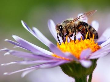 Rosliny Miododajne Jakie Kwiaty Lubia Pszczoly Styl Zycia