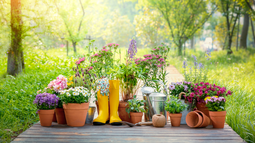 Kwiaty w donicach i narzędzia ogrodnicze