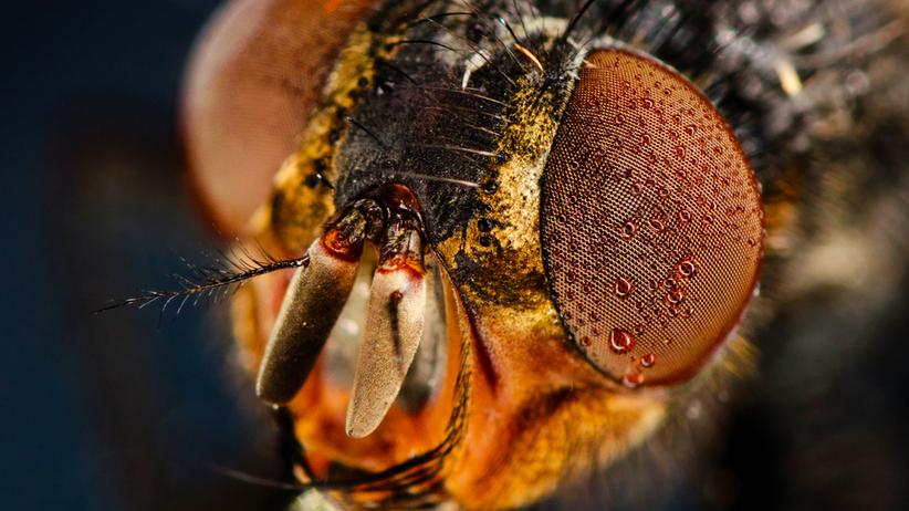 Zbliżenie na muchę