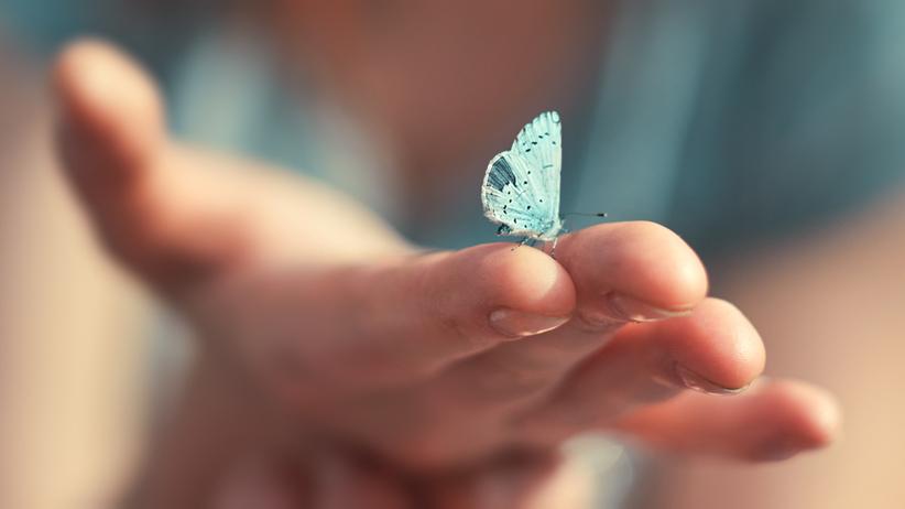 Śnił Ci się motyl? Sprawdź, co oznacza ten sen!