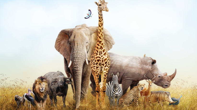 Grupa zwierząt na safari