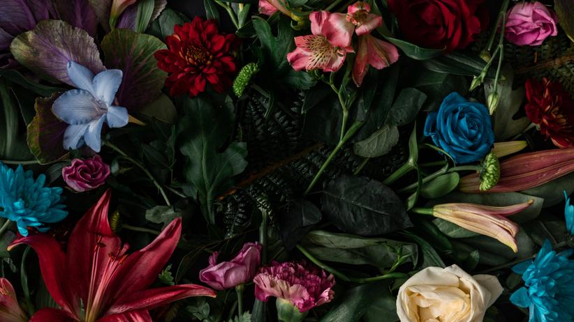 Imieniny Klaudii – kiedy obchodzimy? Daty, znaczenie imienia i życzenia imieninowe dla Klaudii