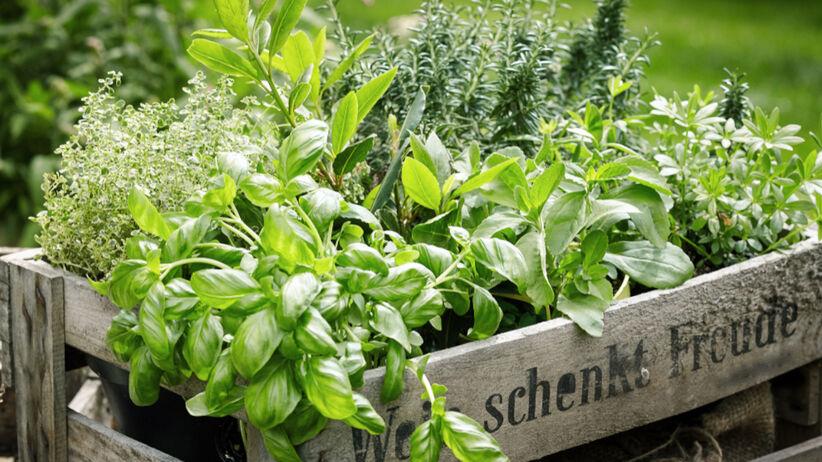 Jak dbać o ekologię w kuchni? 5 prostych trików