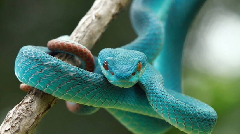 Sennik: wąż
