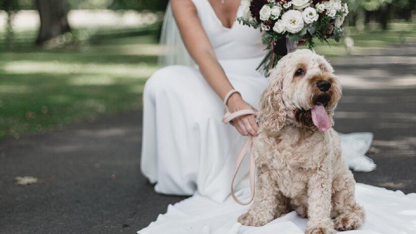 Zaprosili na wesele psy zamiast dzieci. Para młoda w ogniu krytyki